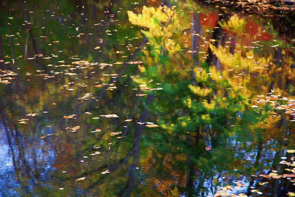reflectionsharrybrookpark